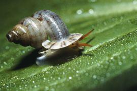Shielded from the Rain - Adamsiella pearmanaeana - 20mm. Photo: Richard L. Goldberg