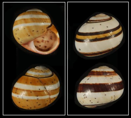 darwinian snails simbio
